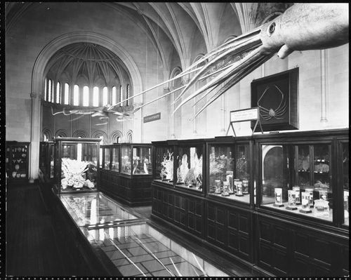 OceanExhibit1901