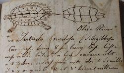 FieldBooks_Jan11 012 turtle1