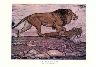 Nature's best bhl lion