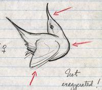 Sketch_3_crop