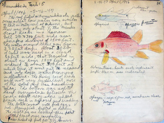 Field book project collection highlights entry with color sketches of fish leonard p schultz april 1 1946 marshall islands national museum of natural history division of fishes ru7220 fandeluxe Image collections
