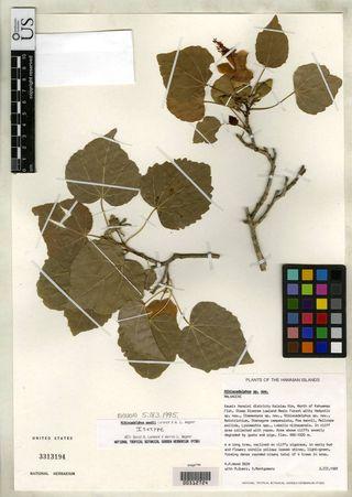 Hibiscadelphus woodii (US 3313194)