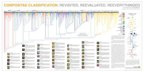 Compositae Classification