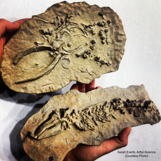 3D print of a whale fossil found in Chile