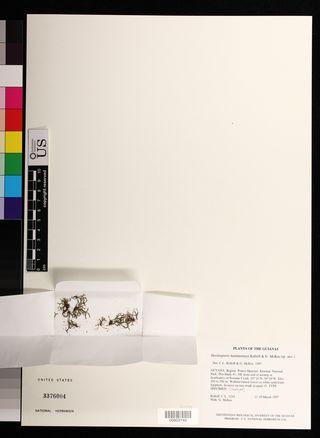 Hecistopteris kaieteurensis (US 3376054)