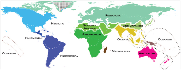 Fig. 2.  Map of the terrestrial zoogeographic realms and regions of the world.  Zoogeographic realms and regions are the product of analytical clustering of phylogenetic turnover of assemblages of species, including 21,037 species of amphibians, nonpelagic birds, and nonmarine mammals. Dashed lines delineate the 20 zoogeographic regions identified in this study. Thick lines group these regions into 11 broad-scale realms, which are named. Color differences depict the amount of phylogenetic turnover among realms. Dotted regions have no species records, and Antarctica was not included in the analyses.