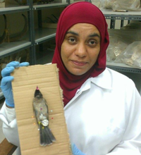Hanan Al Nabhani showing off a bulbul specimens she prepared