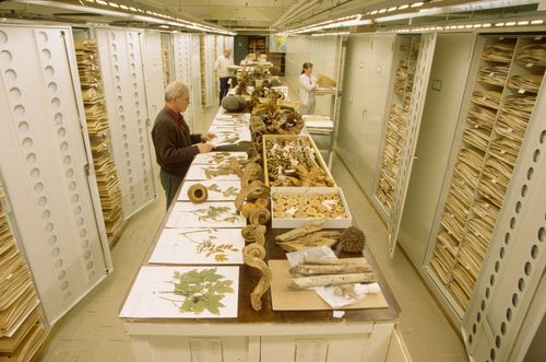 United States National Herbarium