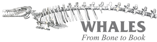Whales-From-Bone-to-Book-SIL