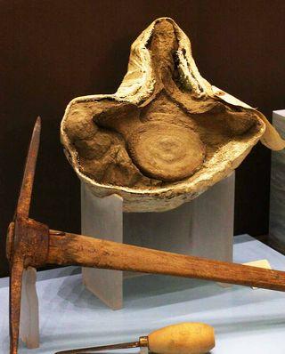 Bone to Book exhibit case