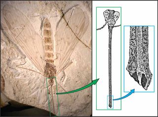 Fossil and drawings 2