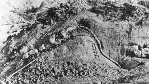 Diplodocus_quarry_1923