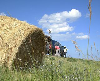 Flat tire and hay