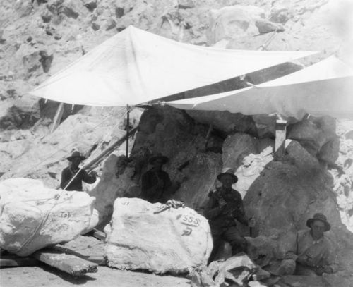 Diplodocus_crew_1923