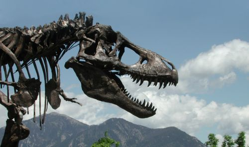 Wankel rex