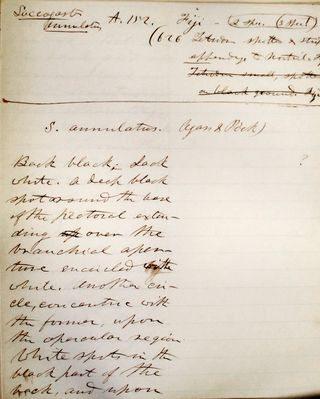 A page from Agassiz's fish report manuscript