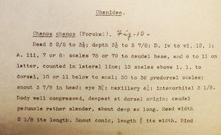 Fowler's description of Chanos chanos