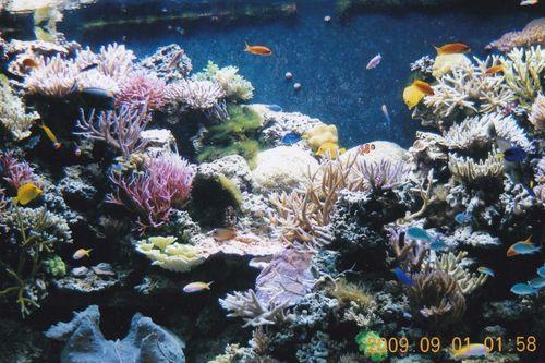 Coral Reef Tank - Sant Ocean Hall