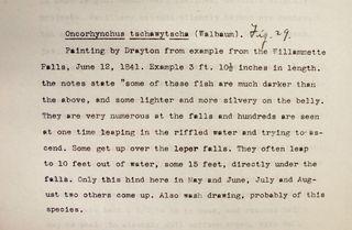 Fowler's Description of Oncorhynchus tshawytscha