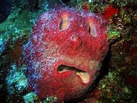 Sponge face by Wayne C