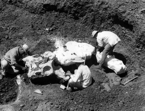 Excavating giant ground sloth bones in Panama.