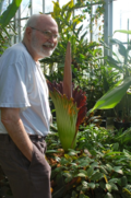 Dan Nicolson observes Amorphophallus titanum in the SI Botany Research Greenhouses (photo by Alice Nicolson)