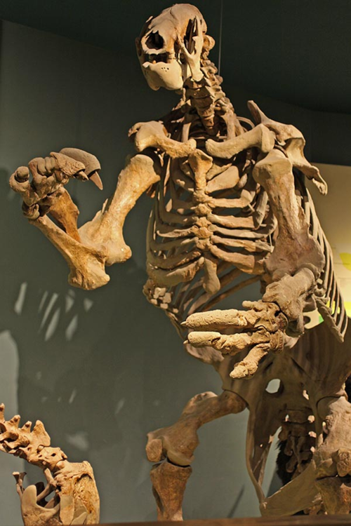 The Smithsonian's Giant Ground Sloths - Digging the Fossil
