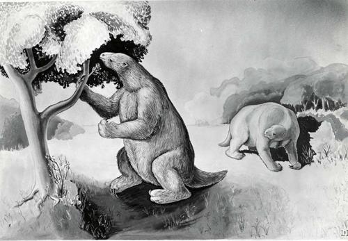 Ground sloth resonstruction