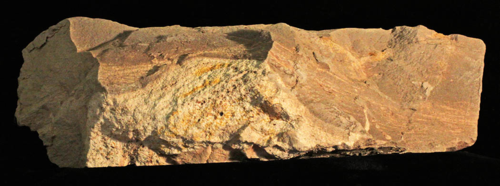 This Cretaceous rock contains both sand and clay sediments.