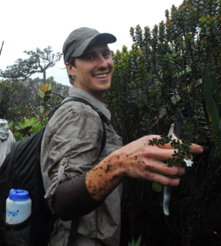 Aleks Radosavljevic collecting a new species of Raveniopsis (Rutaceae) on Mt. Kamakusa in Guyana. (photo by Ken Wurdack)