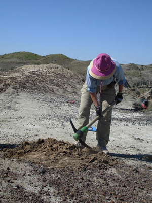 Digging-for-microfossils