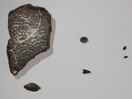 Fossils-picked-from-matrix
