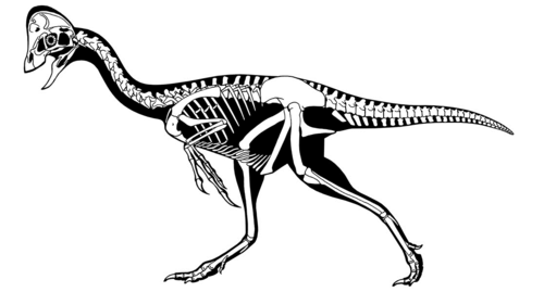 Skeletal reconstruction of Anzu wyliei