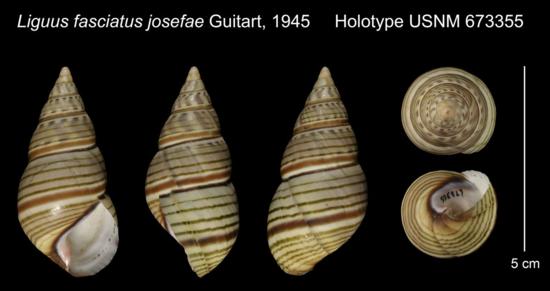 Holotype Plate
