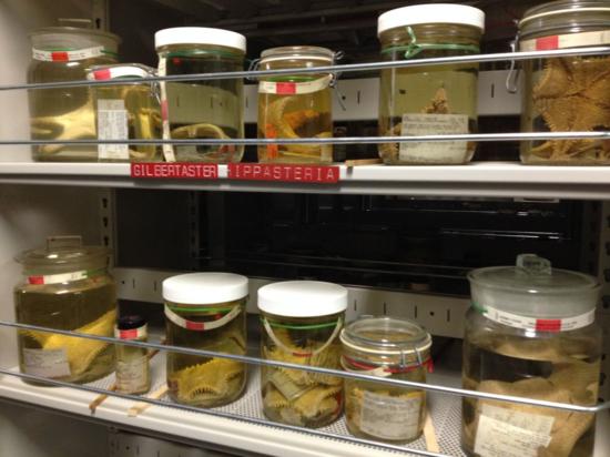 Type specimens of star fish species