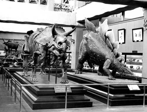 Before 1911, the model of Stegosaurus stenops was exhibited in the Smithsonian's Arts and Industries building with other natural history specimens. pre 1911