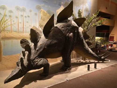 The papier mache Stegosaurus as it has been exhibited since 1981.