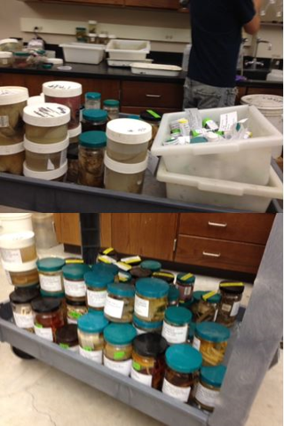 Fig 2. An assortment of the different sized containers that were packed.
