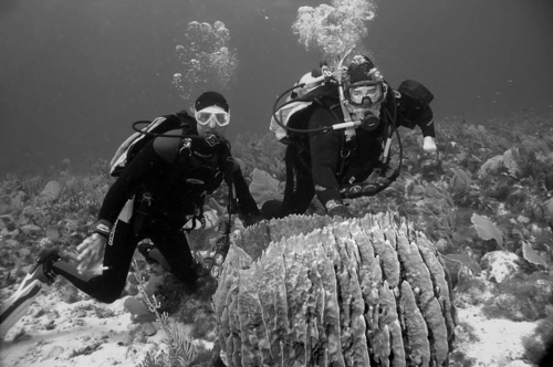 Barrett Brooks (left) and Mark Littler encounter a giant barrel sponge (Xestospongia muta). (Photo by Diane Littler)