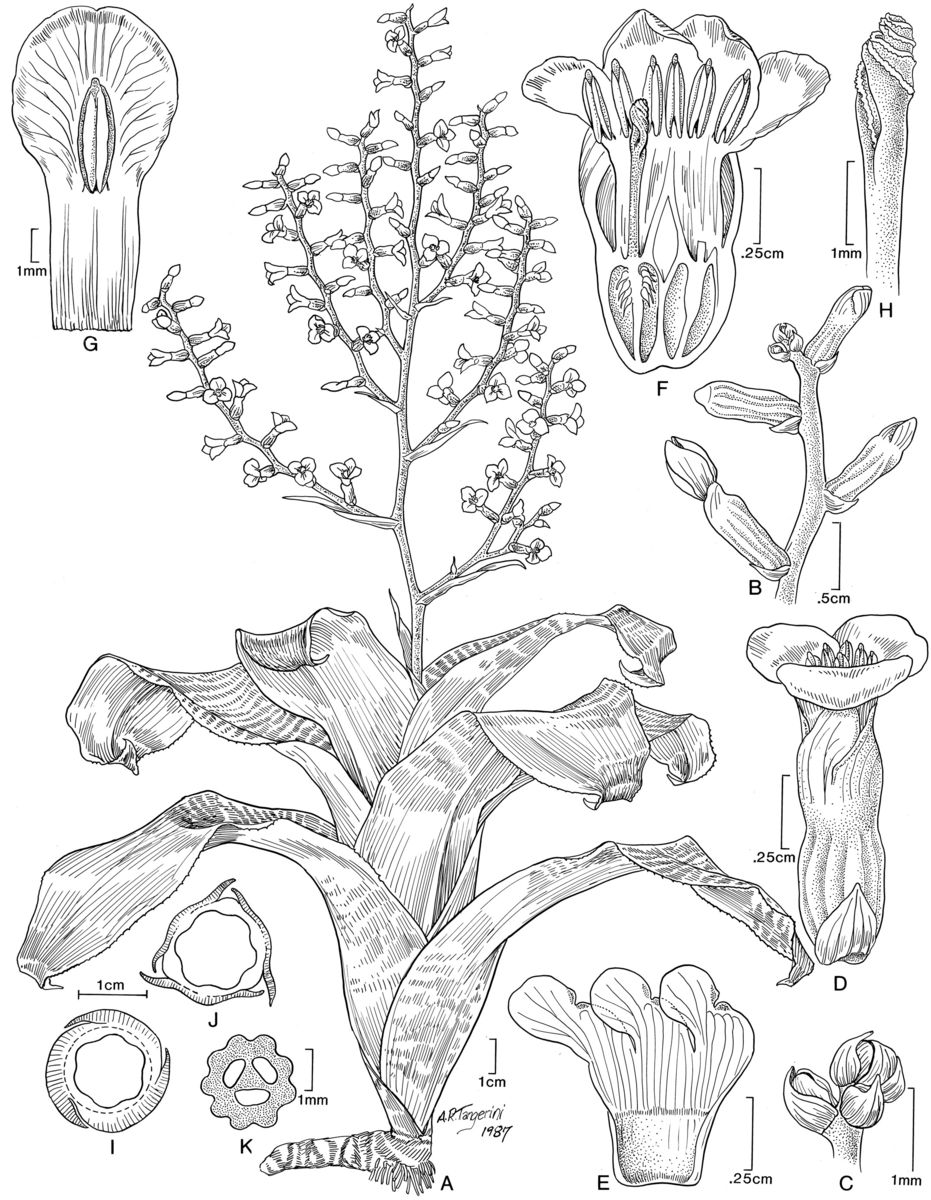 Forest Plants Drawings The Brazilian Rain Forest