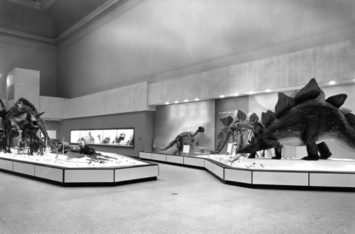 Hall of Dinosaurs and Other Fossil Reptiles, 1963