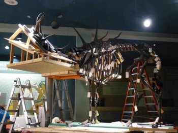 Irish Elk ready to lose its antlers