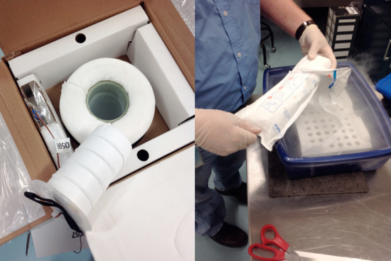 1.Transfer and accession of samples into the Biorepository (Photos of Chris Huddleston and Cheryl Lewis Ames)