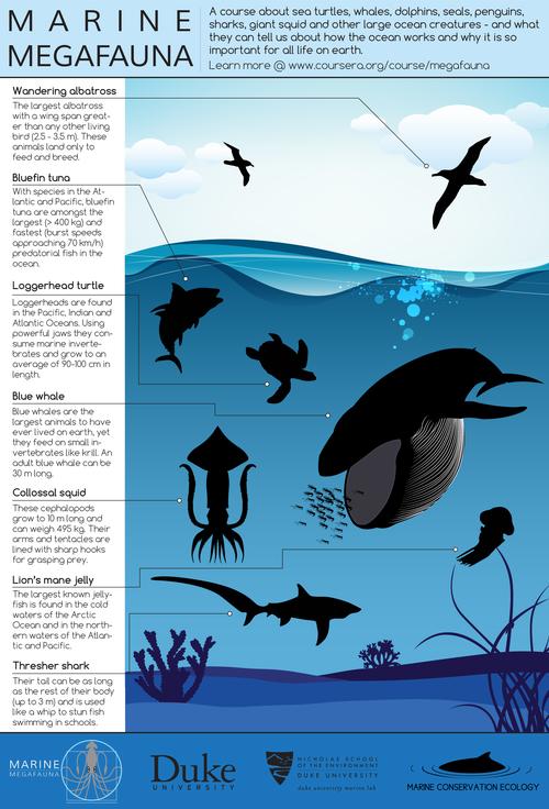 Learninghubs-megafaunainfographic_4