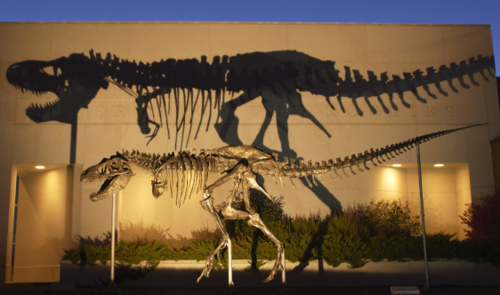 Cast of the T. rex