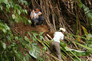 Collecting Heliconia rhizomes in Dominica for the Heliconia experimental garden with Mike Bordelon in 2005. (Photo by John Kress)