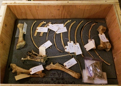 Crated bones