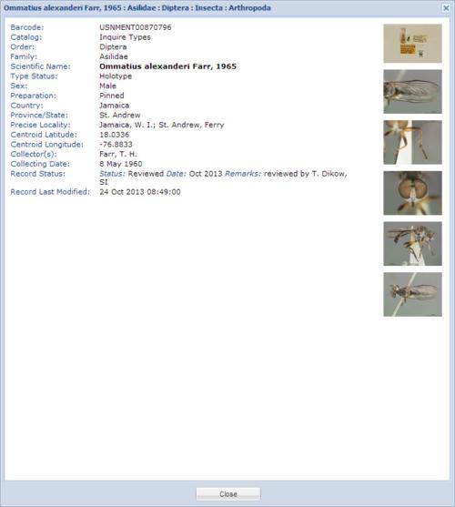 Ommatius alexenderi record