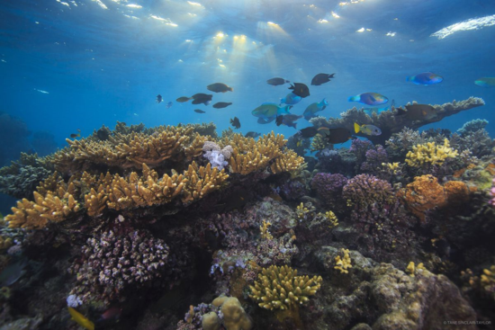 A coral reef in the Farasan Islands
