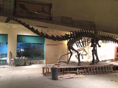 Diplodocus before dismantling